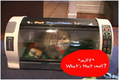 Pet Pavillion: Luxury Pet House Or Doggie Death Chamber?