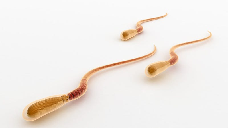 Science Discovers That Sperm Aren't So Much Swimmers As They Are Crawlers