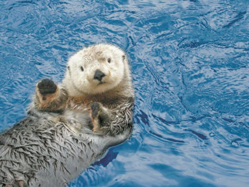 Here's A Waving Otter To Clear Your Heads Of Dong For The Weekend