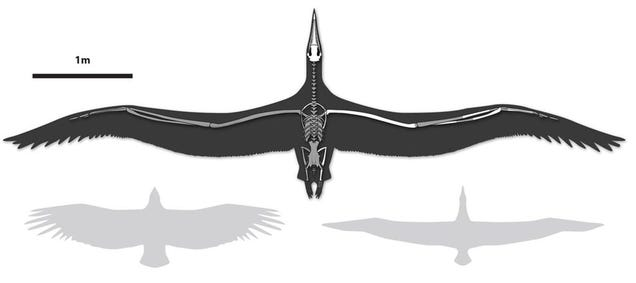 World's largest flying bird was as big as some aircraft