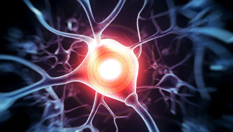 Blasting the Brain with Ultrasound Enhances Sensory Abilities