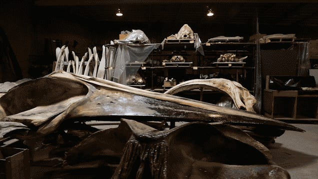 One of the most fascinating museums on Earth is in a fetid LA warehouse
