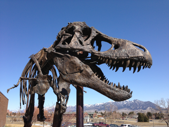 Ask A Paleontologist All Your Questions About Dinosaurs!