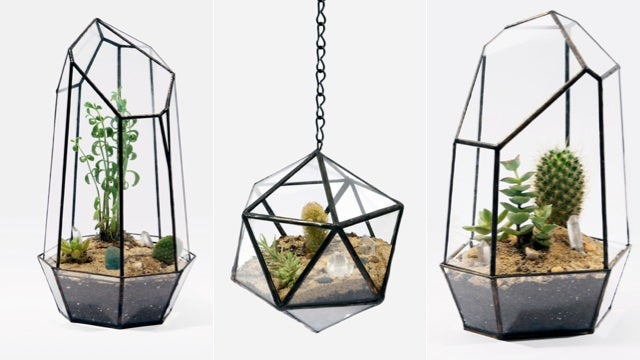 Geometric Terrariums Are a Gorgeous Excuse to Buy a Cactus