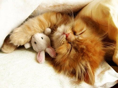 10 Photos Of Animals With Stuffed Animals