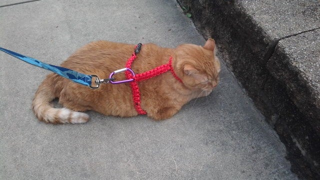 Keep Your Pets Safe with a DIY Paracord Harness