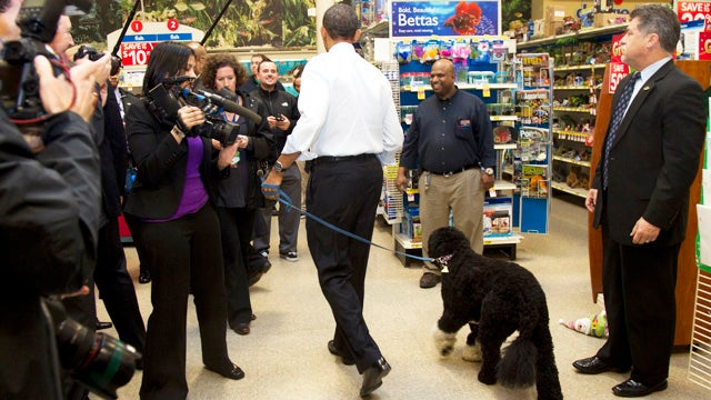 Has the Obamas' Dog Been Lying About His Whereabouts?