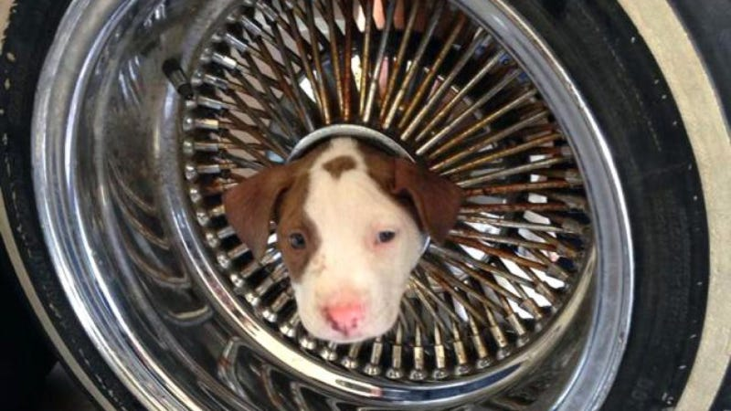 What To Do When A Puppy Gets Stuck In Your Car's Wheel