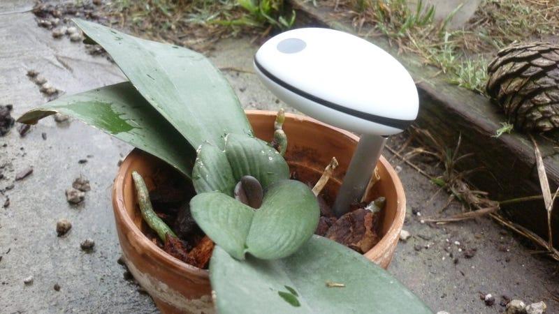 Koubachi Plant Sensor Review