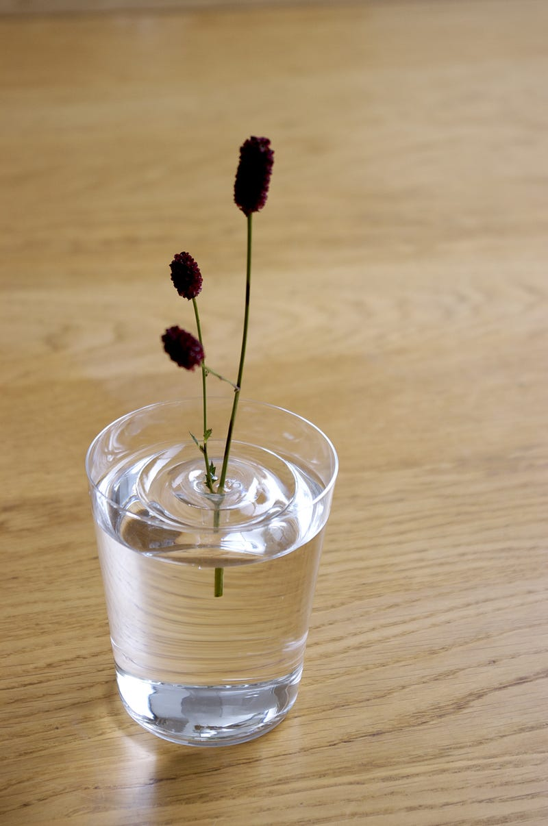 These Awesome Floating Vases Are Practically Invisible