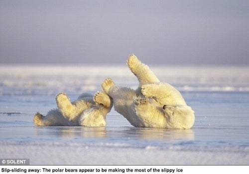Adorable Polar Bear Shows Adorable Cub How To Ice-Skate