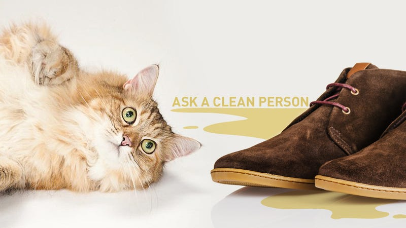Help! The Goddamn Cat Peed On My Loafers
