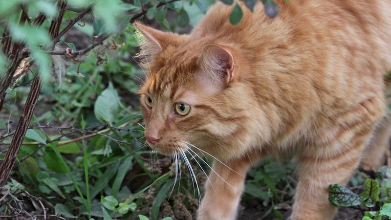Cats Are Killing Over Two Billion Birds a Year
