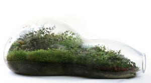 Turn a Wine Bottle into a Terrarium