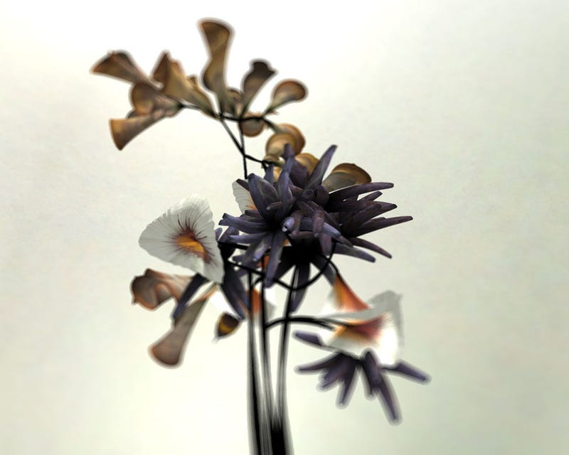 These Beautifully Realistic Flowers Are Actually Pure Code
