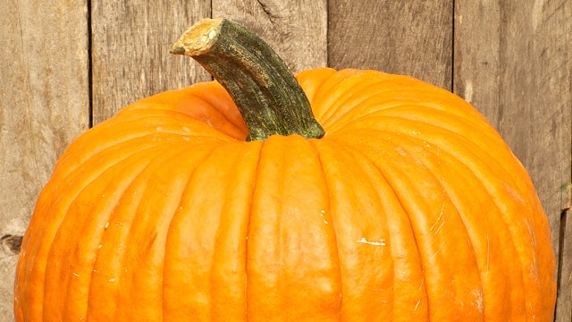 Man Wins $15,500 for Growing Fattest Pumpkin Ever