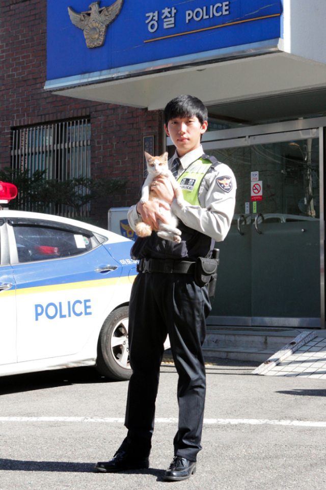 Korea's Cop Cats Will Arrest You with Cuteness