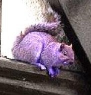 Purple Mutant Squirrels Plan A Gothy Invasion