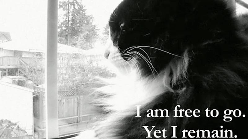 Henri the Existential Cat Has Become a Corporate Sellout for Friskies