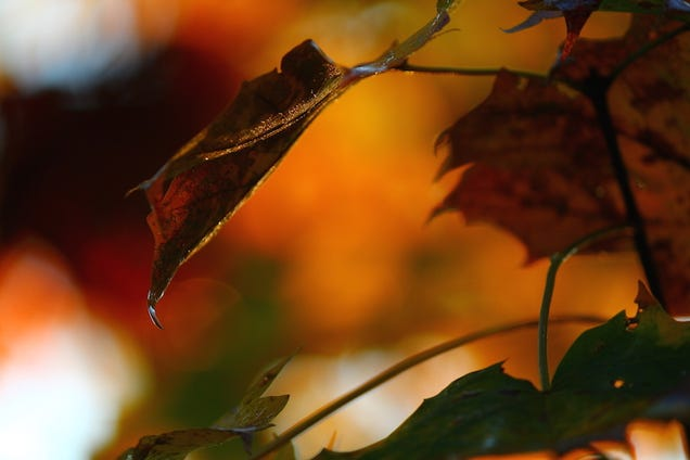 76 Stunning Photos Of Fall Leaves