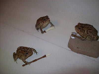 Is This Battletoads?
