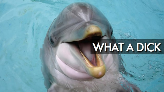 Don't be fooled: dolphins are actually huge assholes