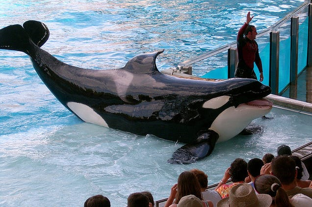 SeaWorld Hopes You Forget About 'Blackfish' With These Shiny New Tanks