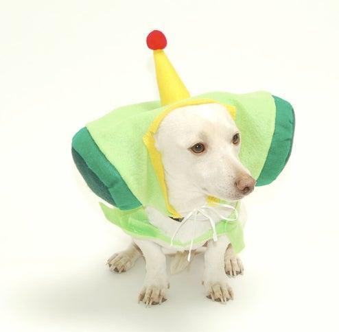 Fun Ways to Torture Your Pets: Katamari Damacy Costume