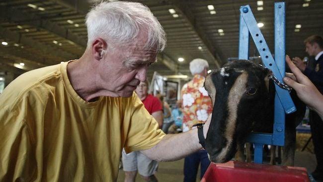 Oregon Legislators Set to Apply Firm Yet Gentle Hands to Goats