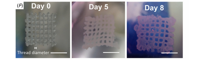 Scientists Are 3D Printing Whole Cancer Tumors From Scratch