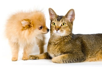 Science Says Dogs Are Smarter Than Cats