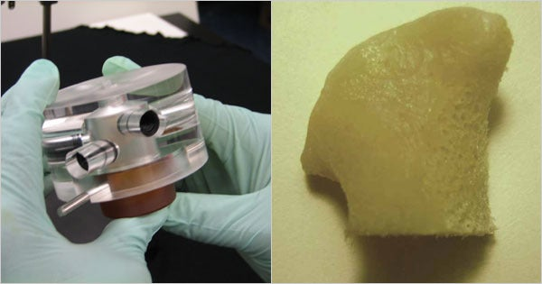 This Living Human Bone Was Grown In Lab