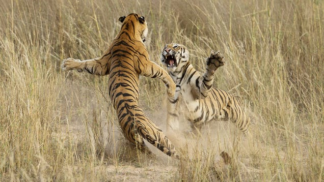 The Winning Images From National Geographic's 2014 Photo Contest