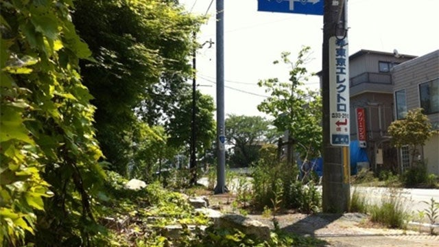 Plants Are Taking Over Japan's Nuclear Wasteland
