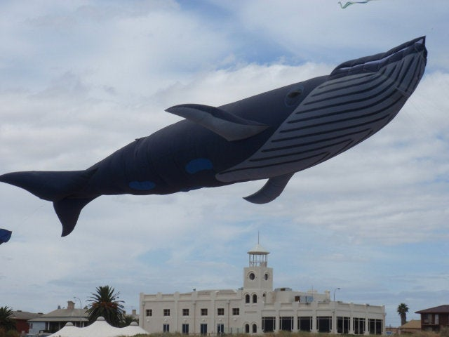 Beware the real-life, 98-foot Fail Whale who terrorizes the skies