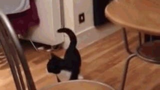 Cat Has Mastered Hopping