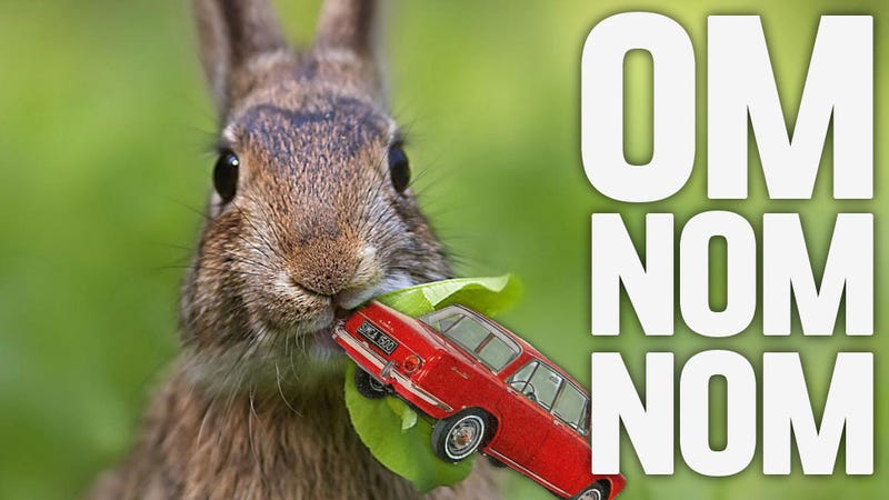 Car-Hungry Rabbits Are Devouring Cars In Denver, Fox Urine May Be The Answer