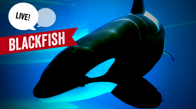 Did Blackfish Make You Rethink That Childhood Trip to SeaWorld?