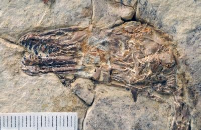 This dinosaur-era bird had a full set of teeth for crushing armored prey