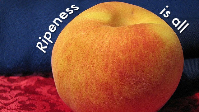 """""""Ripeness Is All"""""""