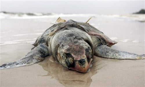 Gulf of Mexico Oil Spill Update: Everything Is Still Totally Screwed