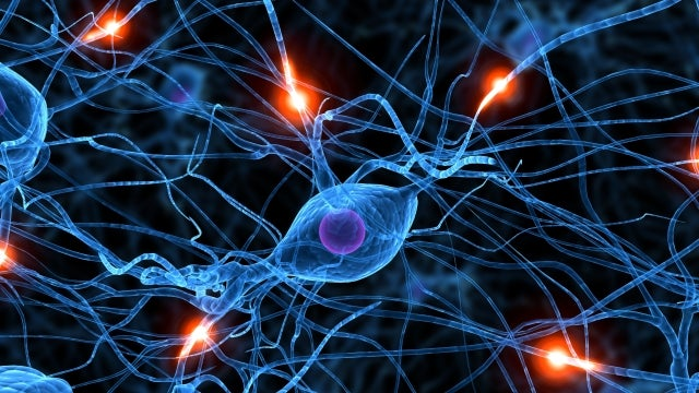 New wonder-drug could give us all super-memory