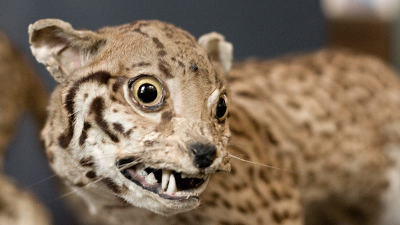 The World's Most Awkward Taxidermy