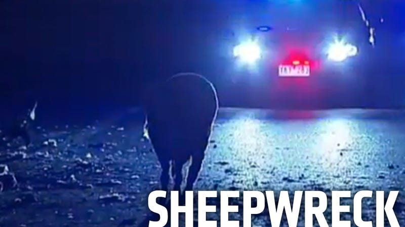 Overturned Truck Dumps 400 Sheep Off Overpass