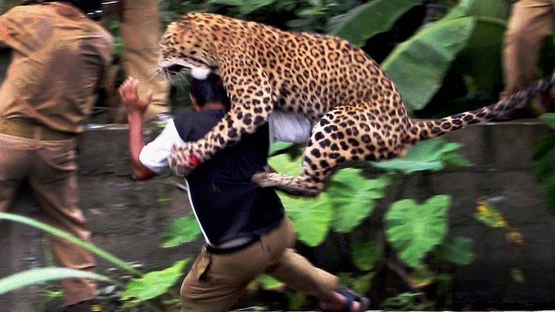 A Man-Eating Leopard Is Running Wild in Nepal