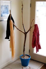 Turn a Fallen Branch into a Coat Rack