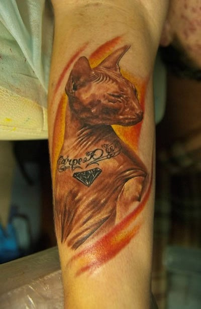 Total Jackass Gives His Cat a Tattoo