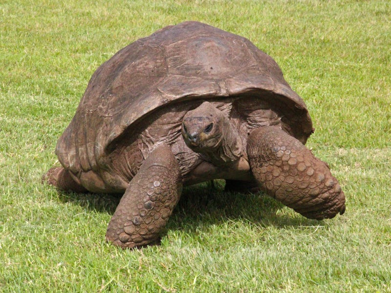 This Tortoise Named Jonathan is 182 Years Old