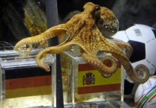 Paul The Octopus Couldn't Predict His Own Death