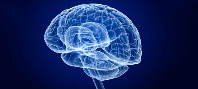 This Brain Decoder Can Read